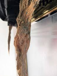 Brown Root Rot
