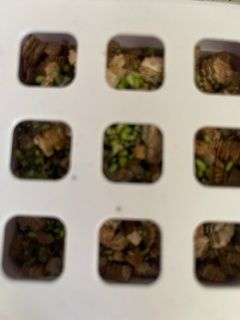 Zoomed in image of Seed Pots showing some seeds are sprouting and it's only day two!