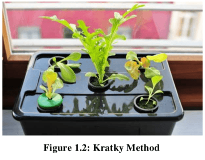 Introducing The Simple Way To Kratky Method For Beginners