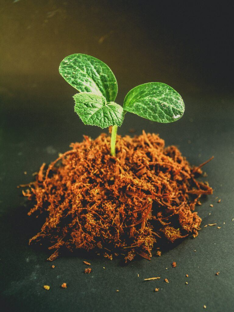 Seed germinated in peat