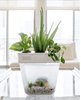 Self-Cleaning and Water Garden on top.